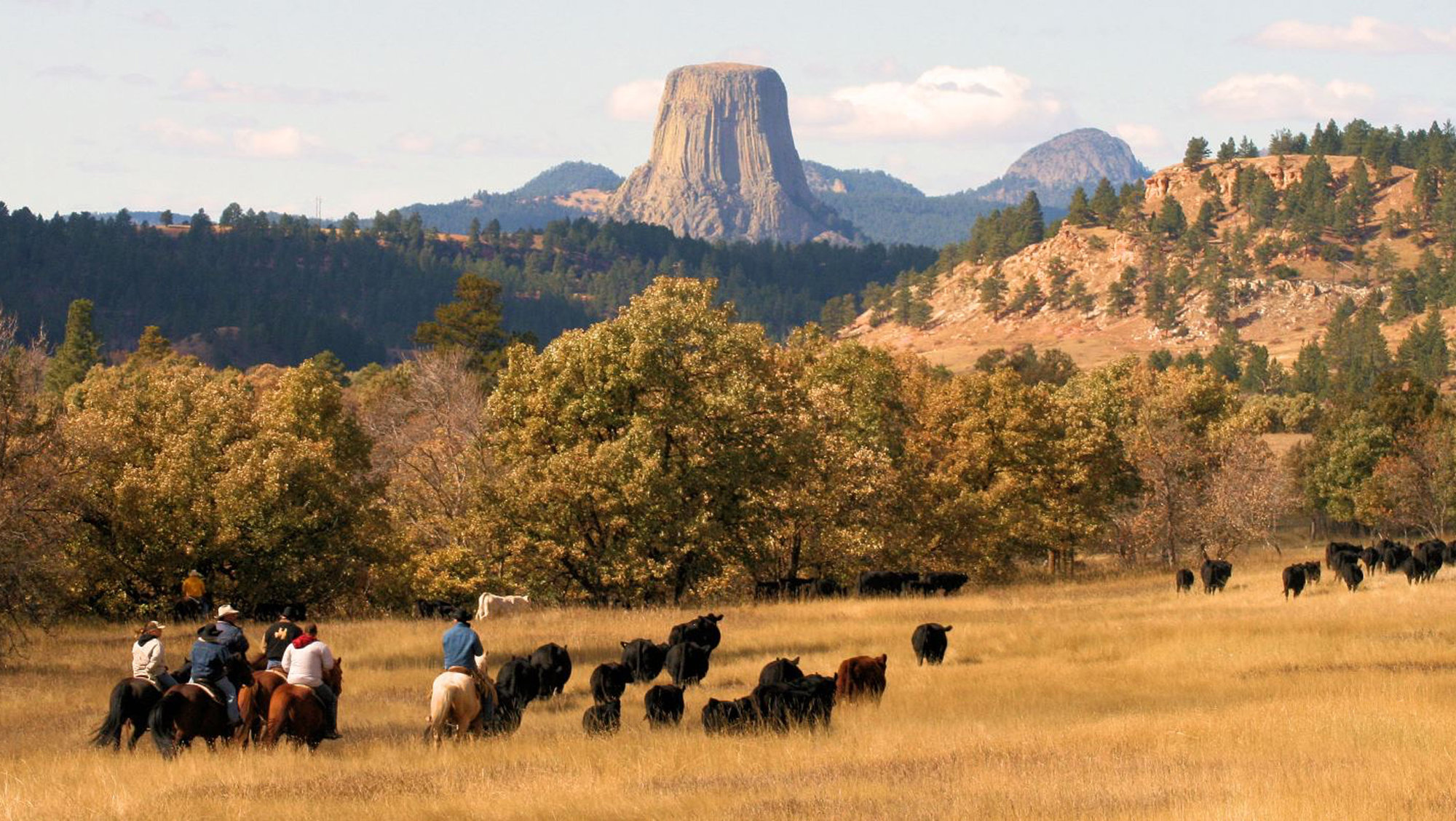 Devils Tower Wy >> Black Hills National Forest   Sartle - Rogue Art History