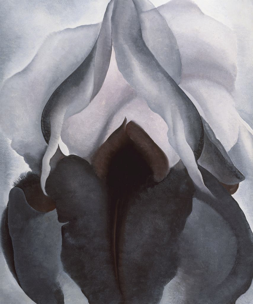 Artistic photos of the vulva