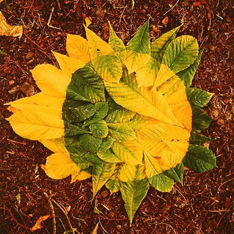 horse chestnut patch, green to yellow, torn leaves, with spit, yorkshire sculpture park by andy goldsworthy